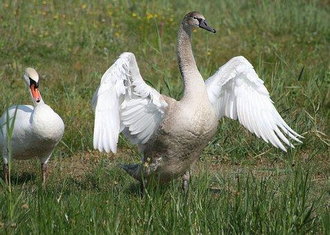 Bay Sum, Park Marquenterre, Birds, Nature, Fauna