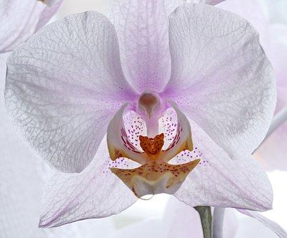 Orchid, Blossom, Bloom, Houseplant, Flower, Tender