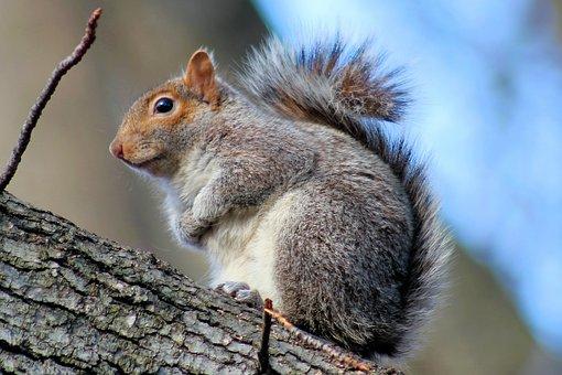 Squirrel, Park, Nature, Wildlife, Forest, Cute, Fur