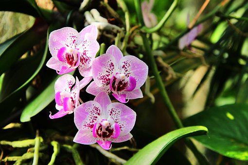 Orchids, Flower, B, Blossom, Bloom, Nature, Plant