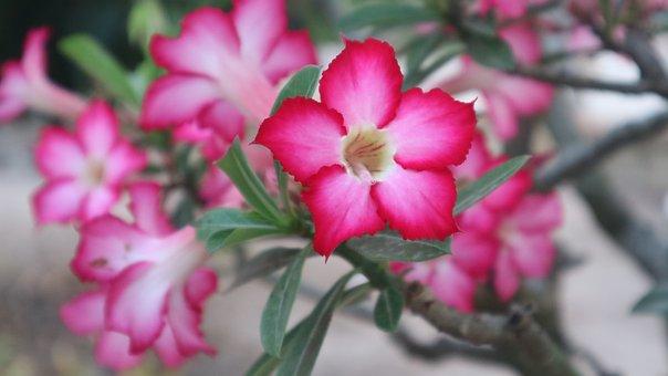 Flowers, Red, Garden, Green, Nature, Five Petals