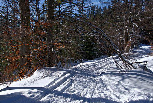 Way, Snow, Winter, Landscape, Nature, Tree, Forest
