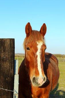 Horse, Prairie, Nature, Pastures, Pre, Sky, Field