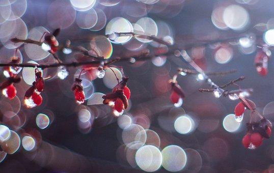 Ice, Icy, Frozen, Drops, Berries, Bokeh, Branch