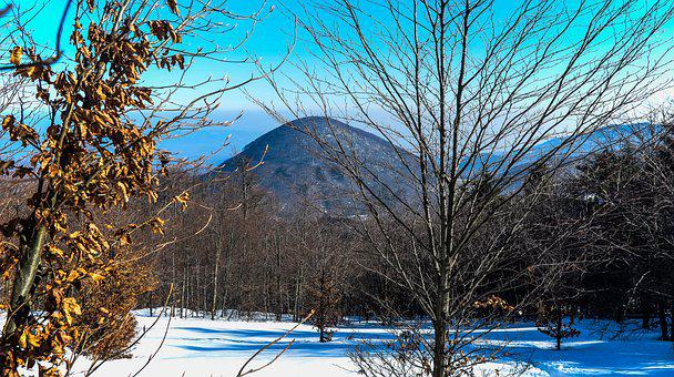 Mountain, Forest, Snow, Winter, Trees, Leaf, Nature