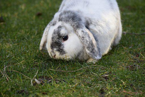 Rabbit, Hare, Easter, Animal, Cute, Nature