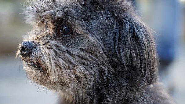 Hybrid, Junction, Race, Portrait, Doggy, Puppy, Dog