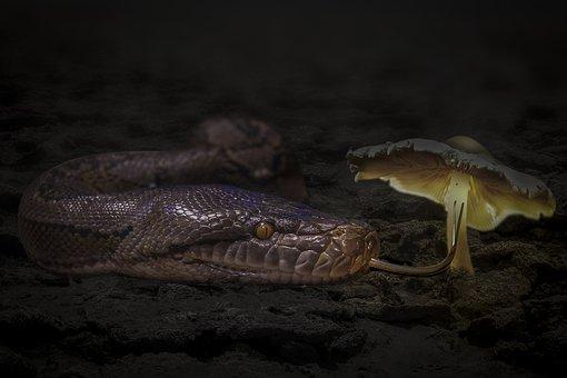 Manipulation, Animal, Snake, Reptile, Mushroom, Desert