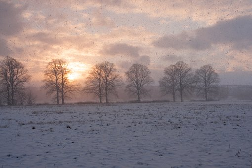 Winter Magic, Winter, Wintry, Winter Forest, Snow, Cold