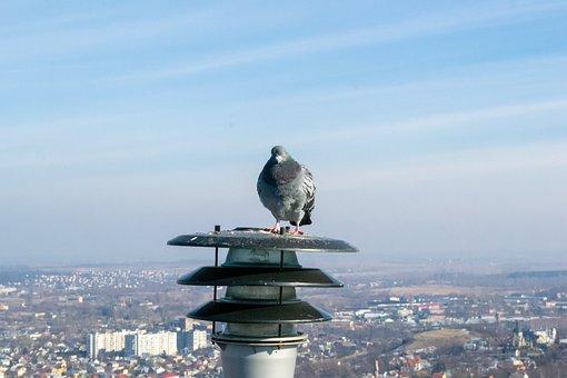 Dove, Bird, Lantern, City, View, Sky, Landscape