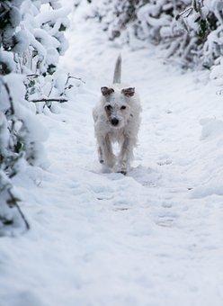 Dog, Snow, Doggy Style, Winter, Nature, Run
