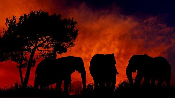 Sunset, Elephants, Silhouette, Nature, Africa, Tree
