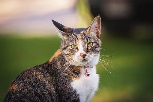 Cat, Kitty, Animal, Pet, Cute, Fur, Eyes, Portrait