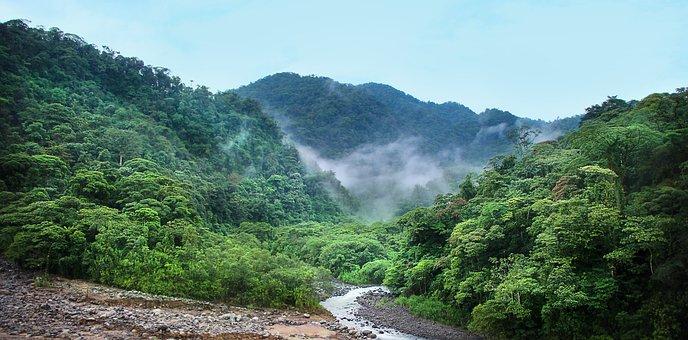 Jungle, Fog, Trees, Green, Rainforest, Tropical, Nature