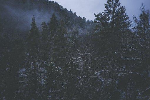 Snow, Winter, Wintry, Hut, Nature, Cold, Landscape