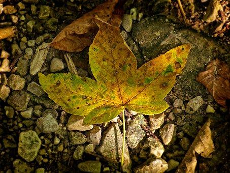 Leaves, Leaf, Autumn, Light, Shadow, Autumn Colours