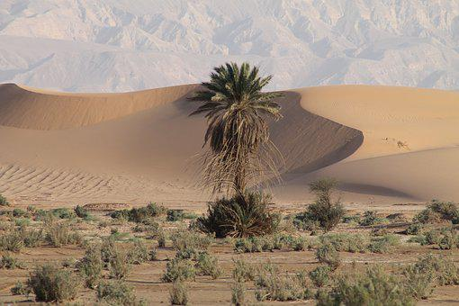 Jordan, Travel, Desert, Palm, Magic, Sand, Trip