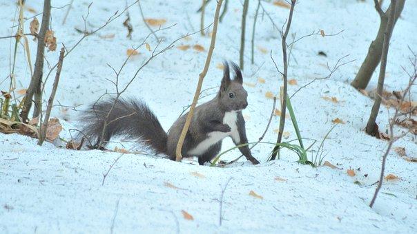 Forest, Animals, Rodents, Creature, Squirrel, Mammalian