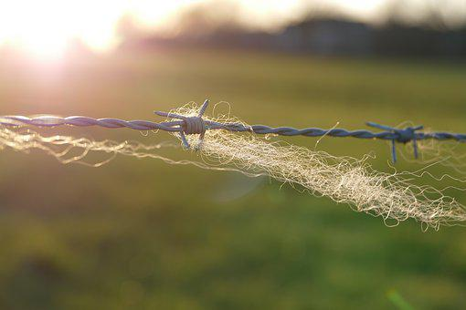 Barbed Wire, Fence, Wool, Pasture, Meadow, Backlighting