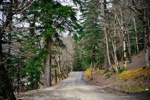 Forest, Road, Mountains, Forests, Trees, Landscape