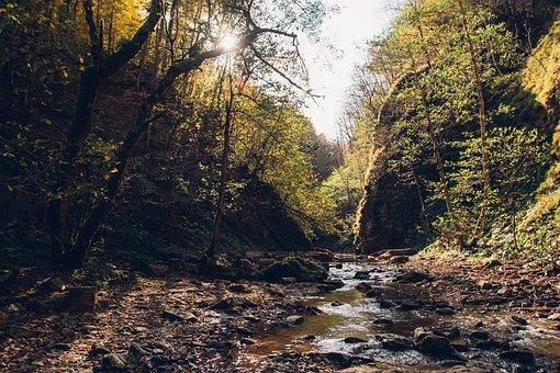 Forest, Autumn, Creek, River, Nature, Landscape
