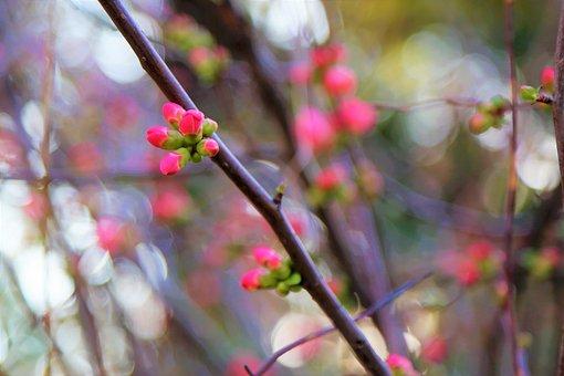 Spring, Flower, Nature, Tree, Pink, Plant, Color
