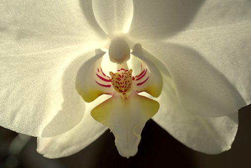 Orchid, Flower, White, Blossom, Bloom, Plant, Nature