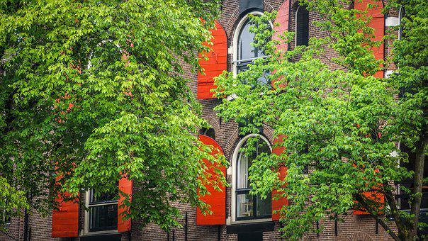 Architecture, Shutters, Trees, Romance, Atmosphere