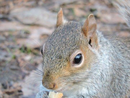 Squirrel, Nature, Park, Rodent, Landscape, Animals