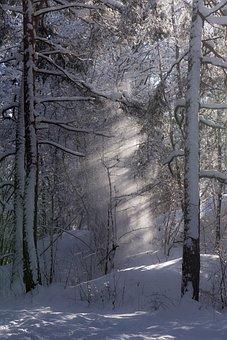 Trees, Light, Sunlight, Mood, Landscape, Mystical