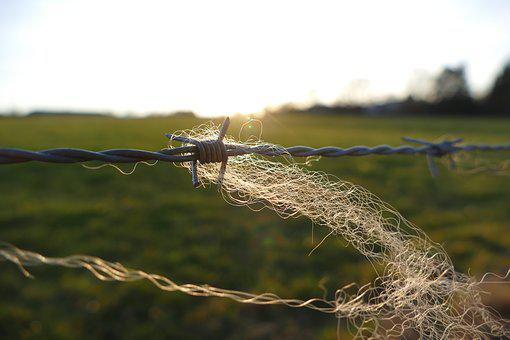 Barbed Wire, Fence, Wire, Close Up, Barbed Wire Fence