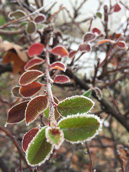 Hoarfrost, Branch, Winter, Cold, Frost, Frozen, Nature