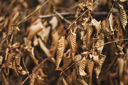 Leaves, Branches, Reisich, Nature, Tree, Autumn, Plant