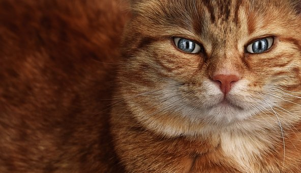 Cat, Mackerel, Eyes, Funny, Domestic Cat, Pet, Animal