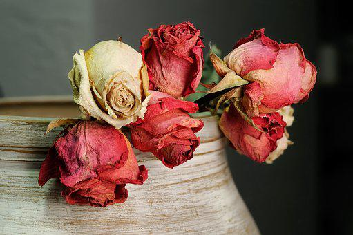 Roses, Dried Flowers, Flowers, Still Life