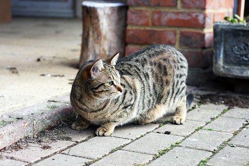 Cat, Kitten, Animal, Pet, Cute, Feline, Eyes, Kitty