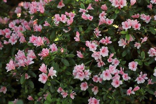Flowers, Field, Bloom, Nature, Flower, Pink, Green