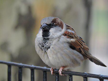 Bird, Nature, Wings, Fly, Animals, Ave, Freedom, Flight