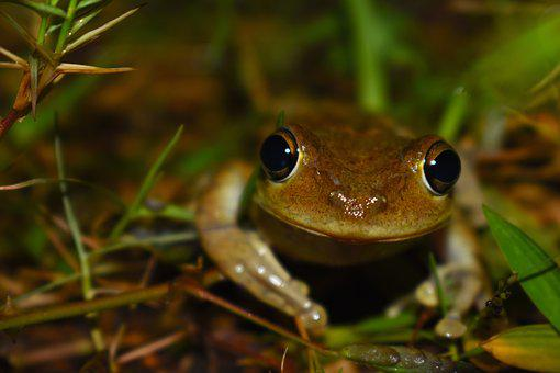 Nature, Frog, Soil, Night, Front, Branches