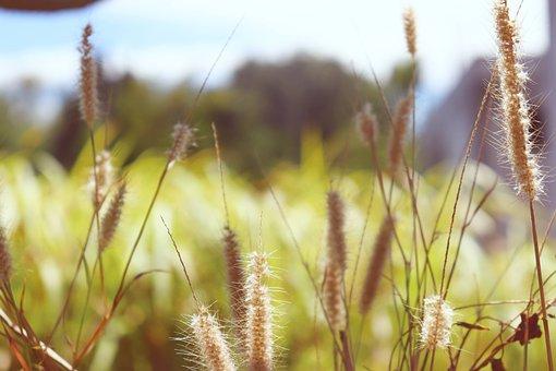 Grass, Nature, Peace, Love, Happy, Peaceful