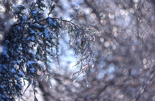Ice, Icy, Crystals, Winter, Cold, Juniper, Light, Bokeh
