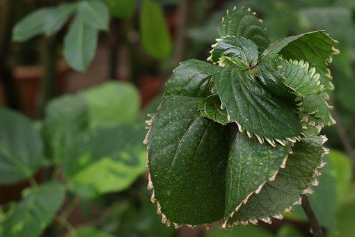 Sheet, Green, Leaves, Tropics, Garden, Exotic, Nature