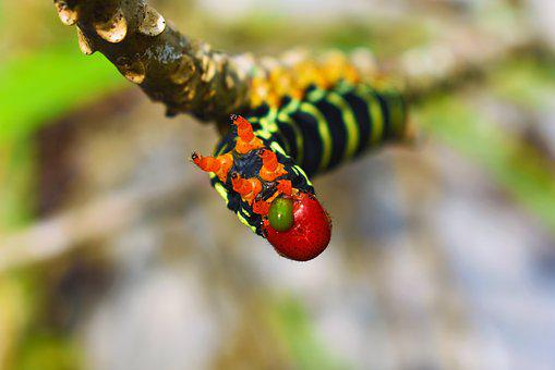 Worm, Nature, Animal, Defense, Branch, Black, Red