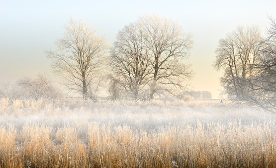 Landscape, Aue, Or Meadows, Fog, Morning Mist
