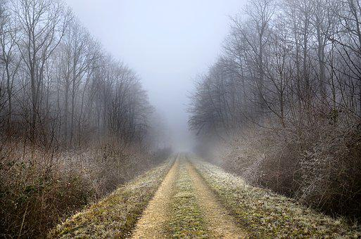 Path, Forest, Winter, Fog, Trees, Nature, Landscape