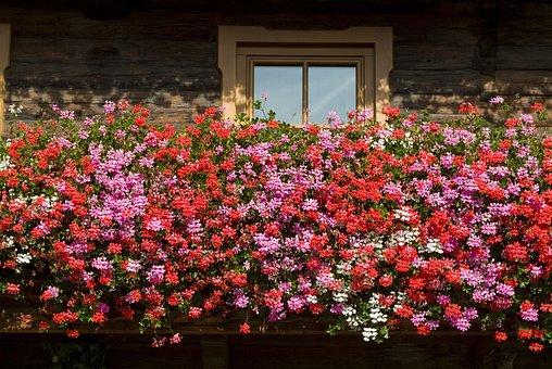 Balkonblumen, Summer, Flowers, Blossom, Bloom, Plant