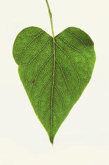 Leaf, Heart, Love, Nature, Plant, Garden, Veins, Green