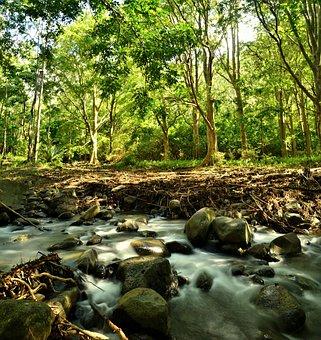 Forest, River, Rock, Nature, Stream, Landscape, Water