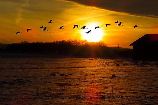 Nature, Landscape, Sun, Sunrise, Sunset, Field, Winter