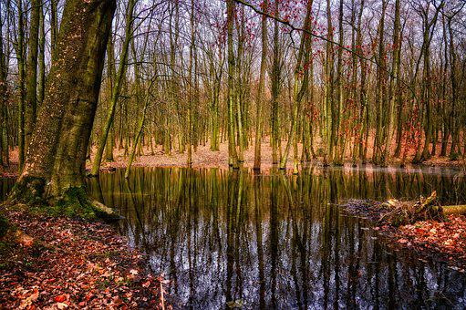 Forest, Trees, Swamp, Water, Mirroring, Autumn